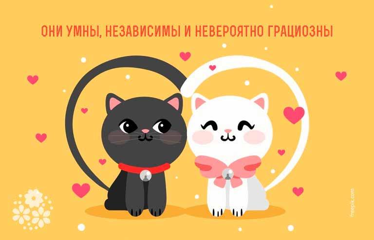 Цитаты и афоризмы про кошек