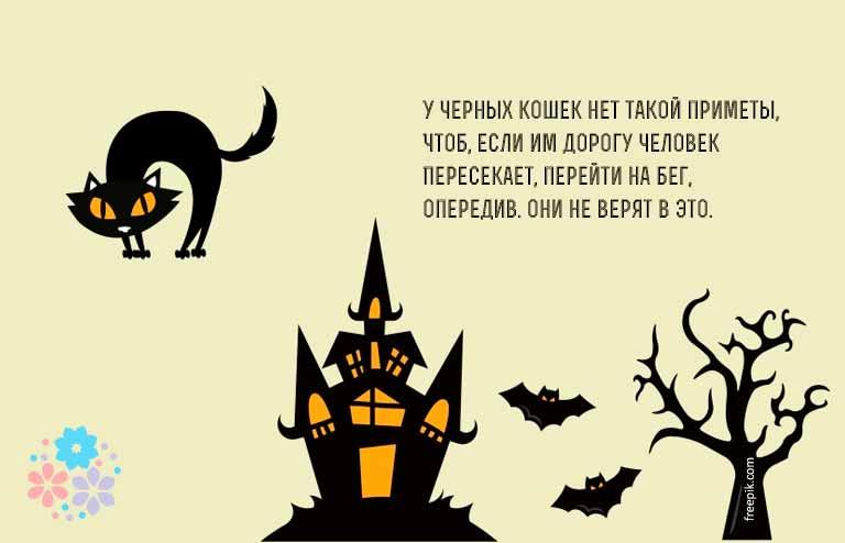 Цитаты про черную кошку