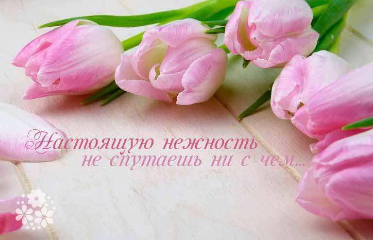 Цитаты и афоризмы про нежность