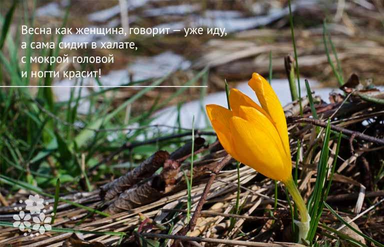 Смешные цитаты о весне