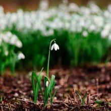 Дивной сказкой Весна возвращается снова. Стихи про весну