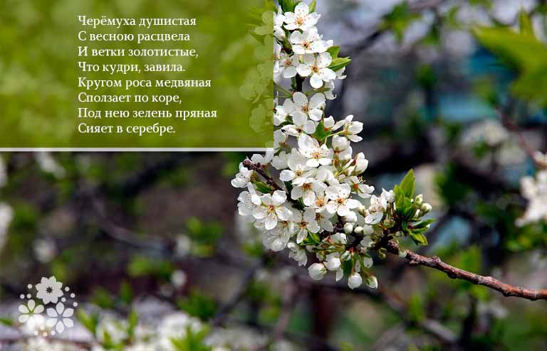 Стихи Есенина про весну
