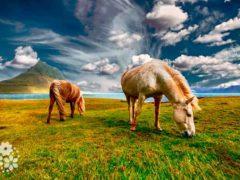 С лошадью не сравнится ни одно животное… Цитаты про лошадей