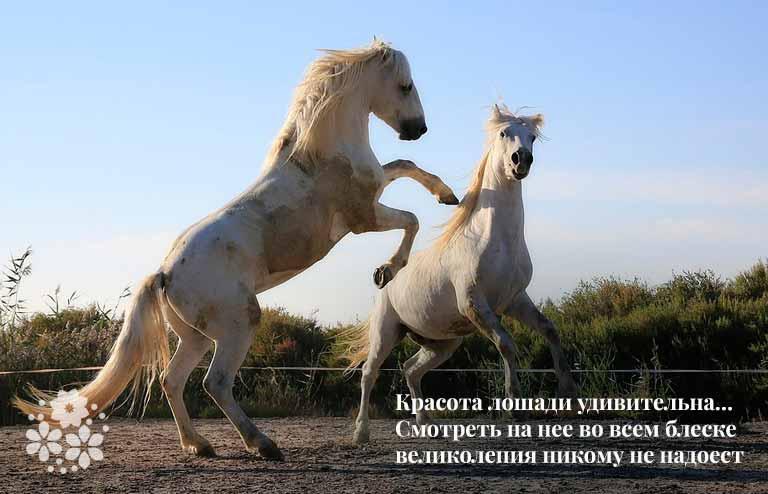 Цитаты великих, известных людей про лошадей