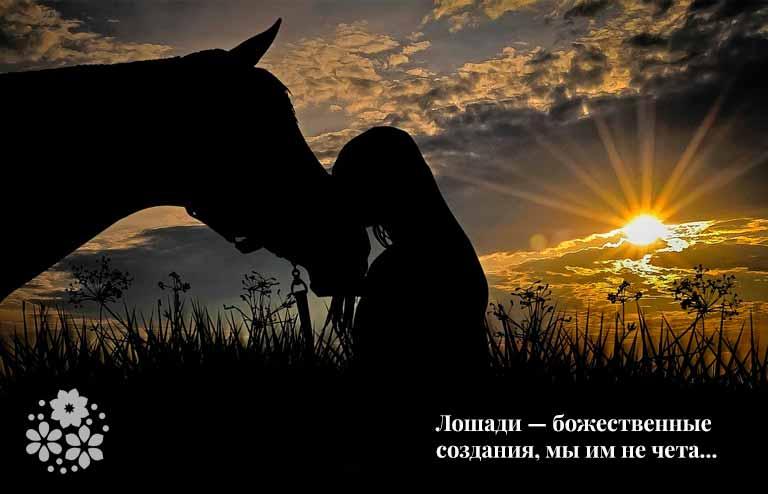 Короткие цитаты и афоризмы о лошадях
