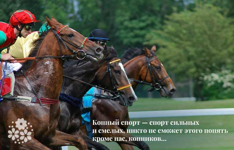 Цитаты про лошадей и конный спорт