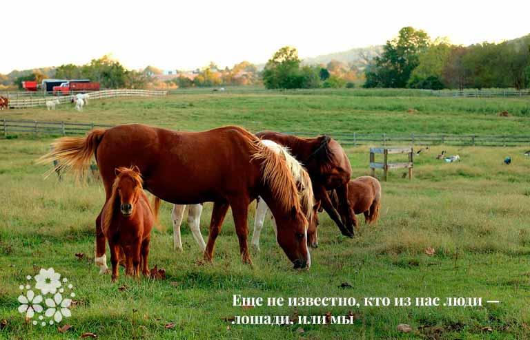 Цитаты про лошадей и людей