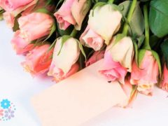 Люблю – что может быть прекрасней! Признания в любви любимой женщине
