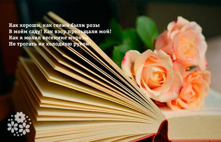 Стихи о розах известных поэтов-классиков