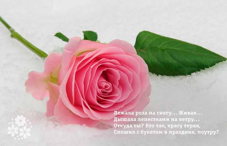 Красивые стихи о розах