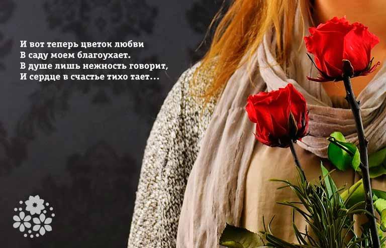 Стихи про розы и любовь
