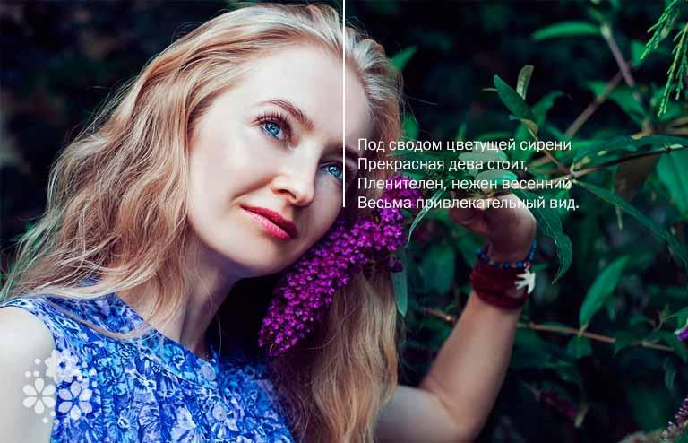 Стихи про сирень русских поэтов-классиков