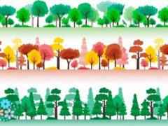 Весной одеваются, осенью раздеваются. Загадки про деревья