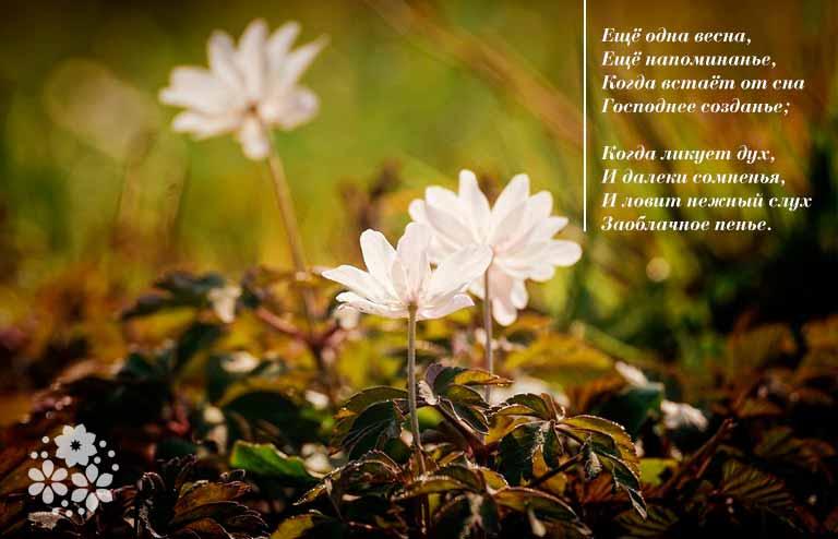 Христианские стихи на пасху