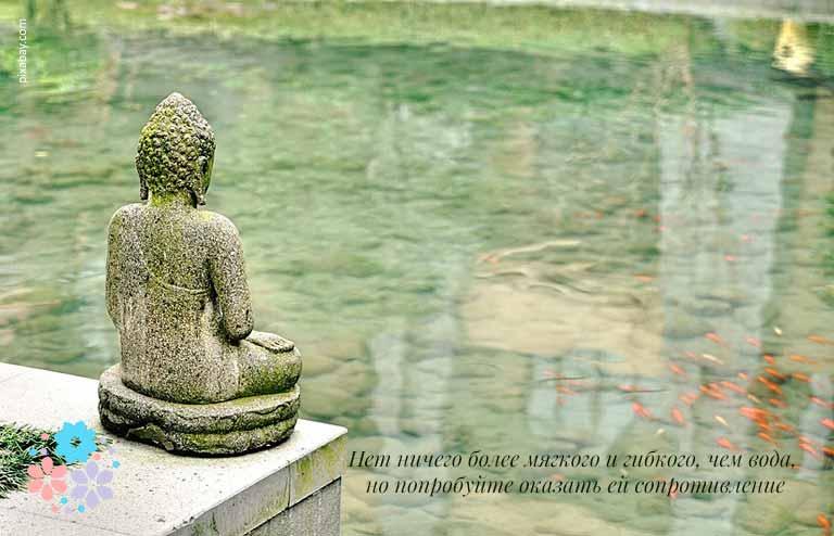 Цитаты про воду и жизнь