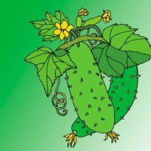 Растут на грядке зелёные ребятки. Загадки про огурец для детей