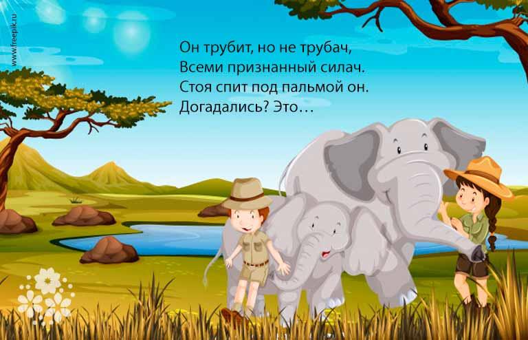 Загадки про слона для детей 5-6 лет