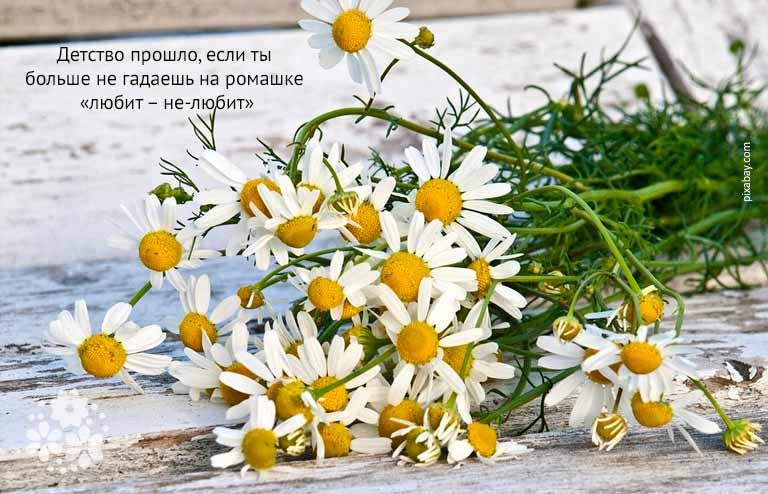 Красивые цитаты про ромашки и лето