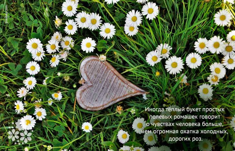 Цитаты, высказывания, афоризмы про ромашки и любовь