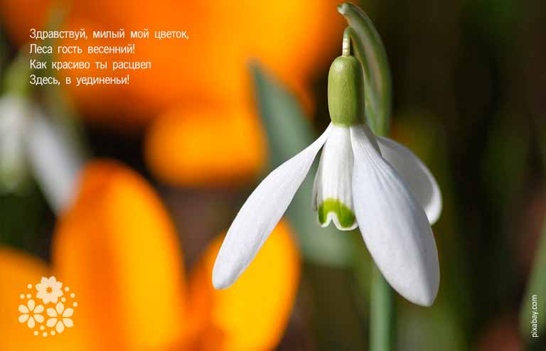 Весенние цветы. Стихи короткие