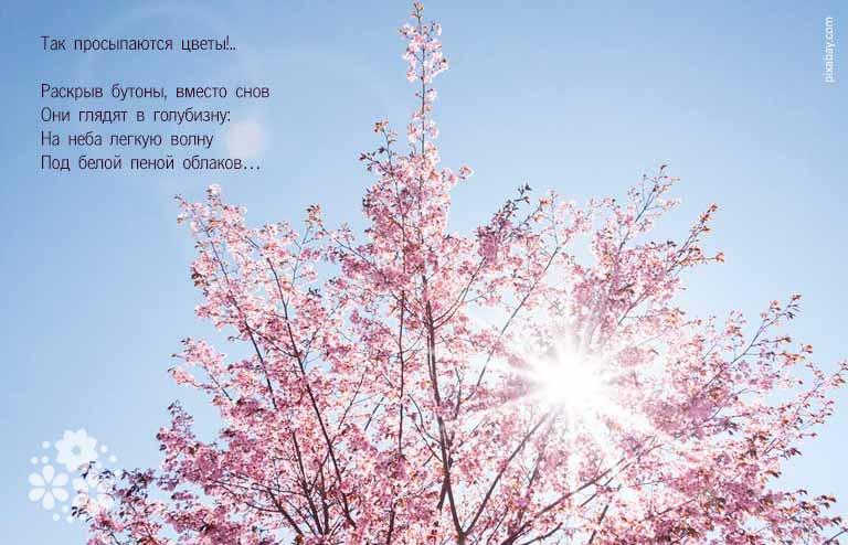 Стихи про весенние цветы