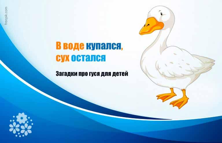 Загадки про гуся для детей