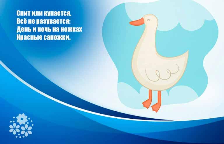 Загадки про белого гуся