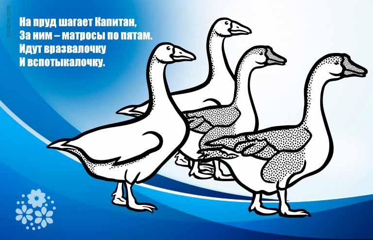 Загадки про гуся на логику с подвохом