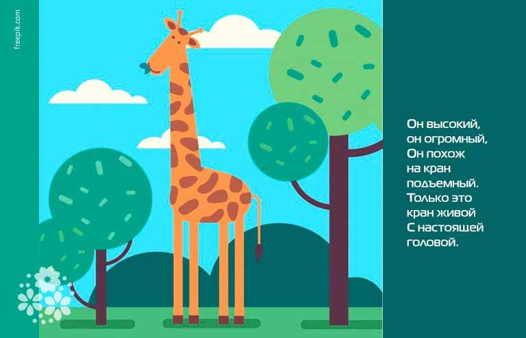 Загадки про жирафа для детей 6-7 лет