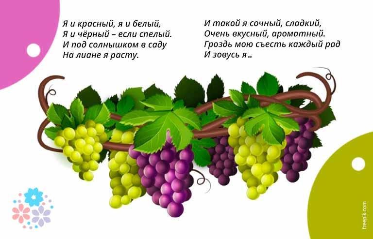 Загадки про виноград для детей 4-5 лет