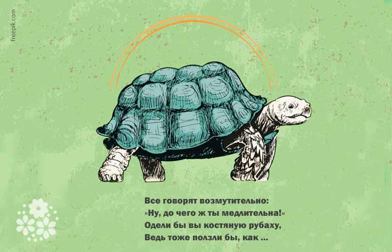 Загадки про черепаху для детей 6-7 лет