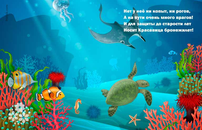 Загадки про черепаху для детей 8-9 лет