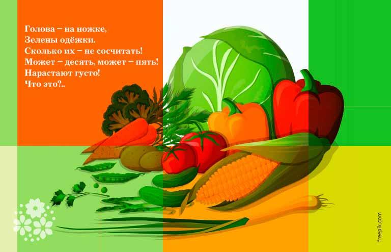 Загадки про капусту для детей 6-7 лет