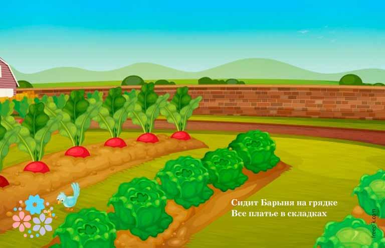 Загадка про капусту с подвохом