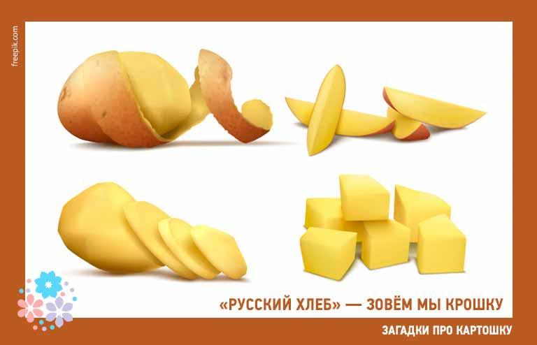 Загадки про картошку