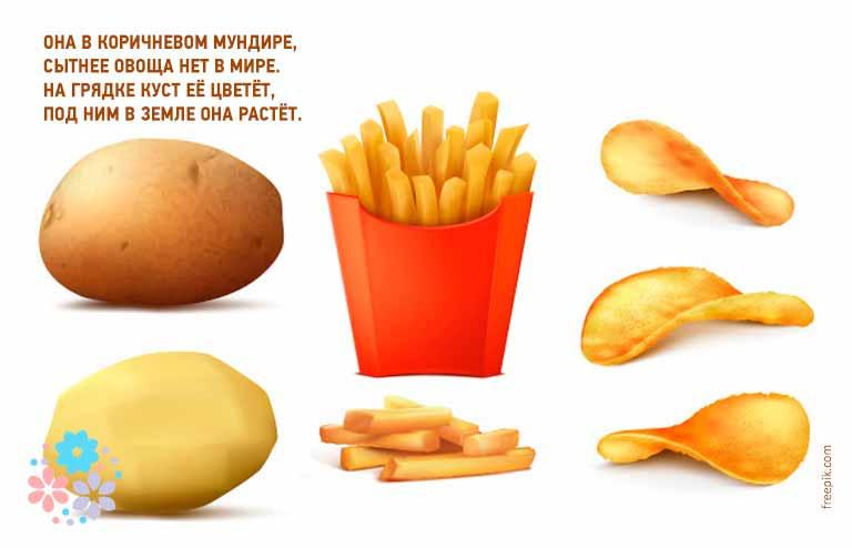 Загадки про картошку для детей 8-9-10 лет
