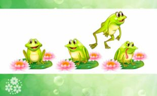 Зелёная квакушка – мокрая лягушка. Загадки про лягушку для детей
