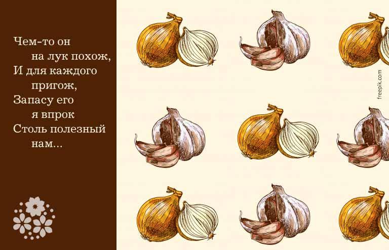 Загадки про лук и чеснок для детей
