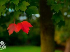 Засентябрил сентябрь сентябристо. Цитаты, высказывания, афоризмы про сентябрь