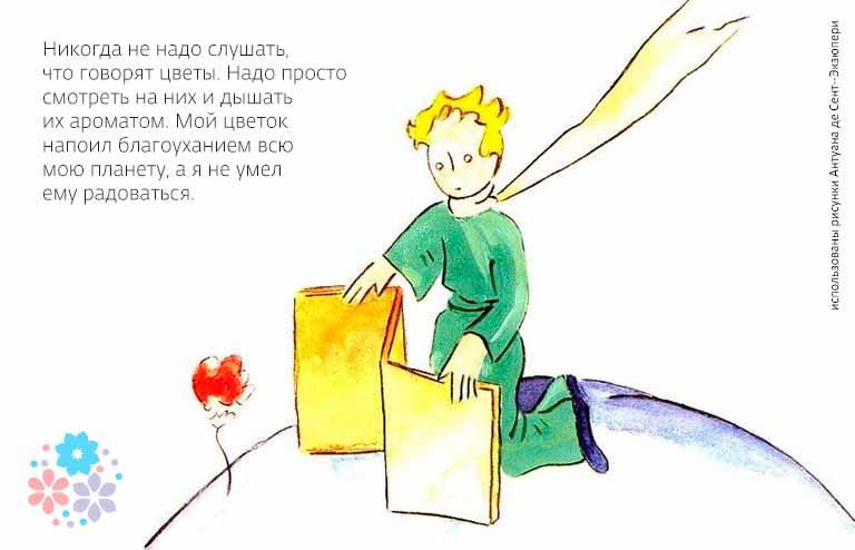 Цитаты из «Маленького принца» про розу