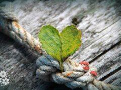 Благодарность — прекраснейший из цветков души. Цитаты и афоризмы про благодарность