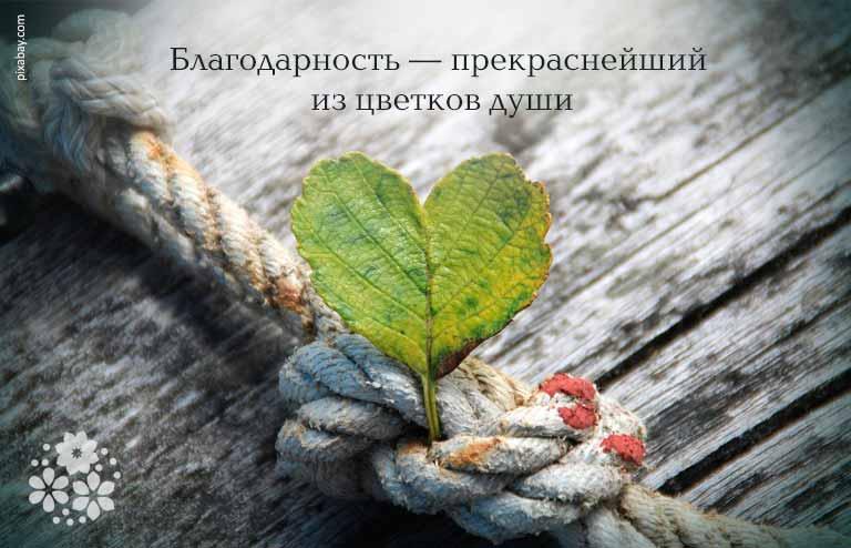 Цитаты и афоризмы про благодарность