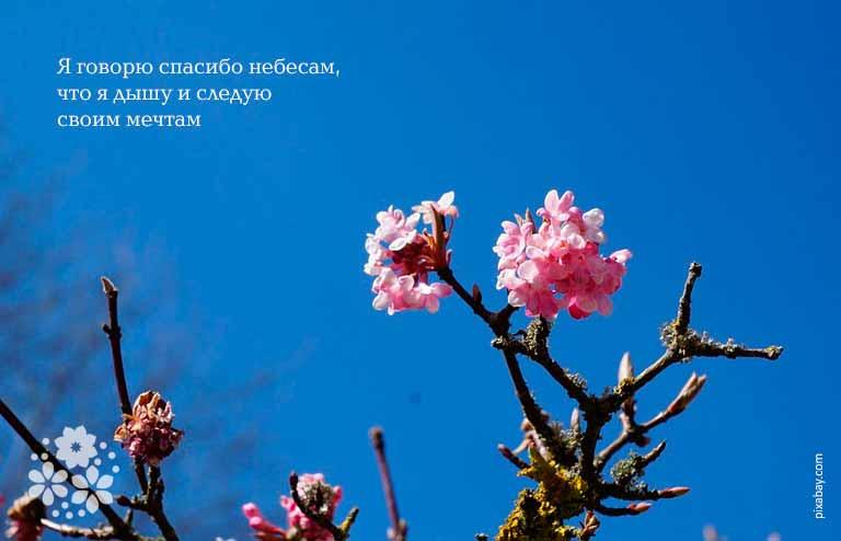 Цитаты и афоризмы про благодарность человеку