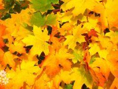 Сентябрь – листопадник. Народные приметы месяца