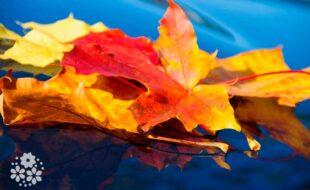 Ах, сколько красок в палитре осенней!  Красивые стихи про осень