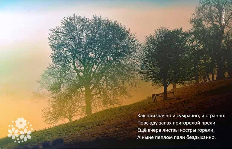 Красивые, душевные стихи про осень, сентябрь и осеннее настроение