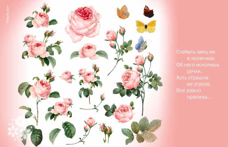 Загадки про розу для детей 4-5 лет