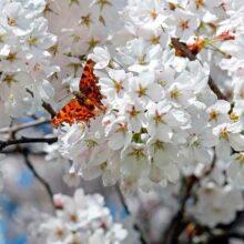 Бабочки — это живые души цветов. Красивые цитаты и статусы про бабочек