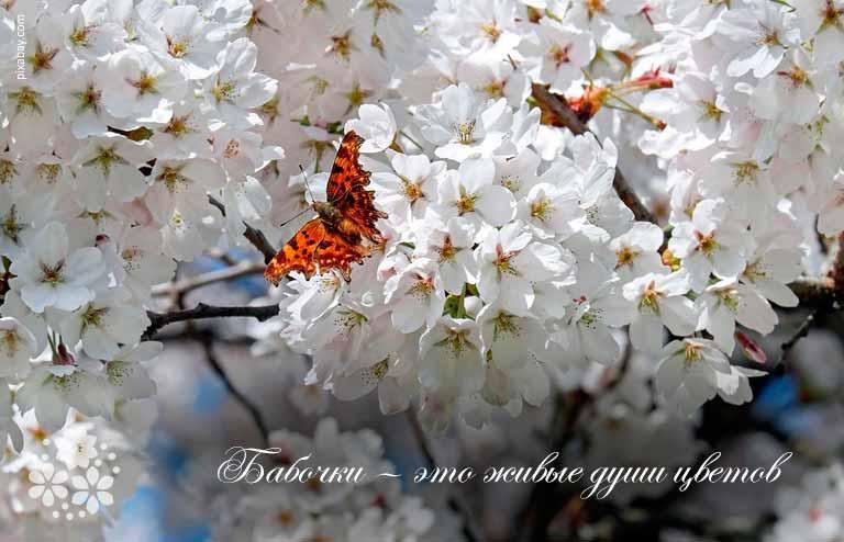 Красивые цитаты и статусы про бабочек