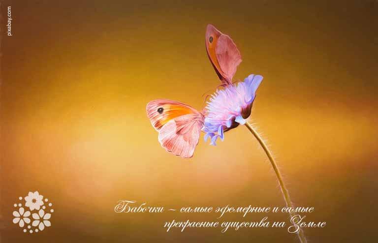 Красивые цитаты про бабочек со смыслом